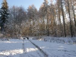 Leśna droga obwód 157